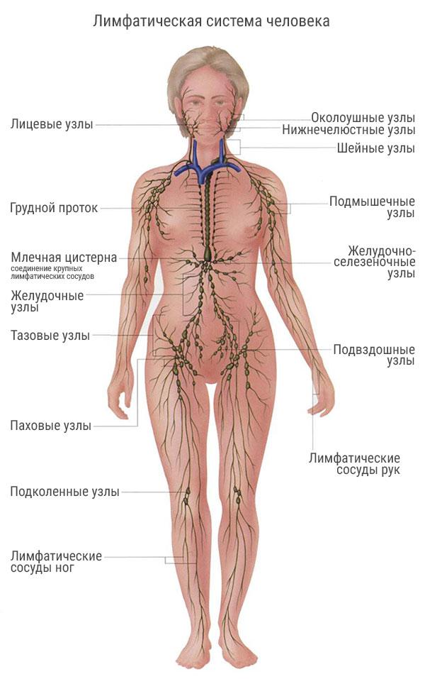 limfaticheskaya-sistema-reiki