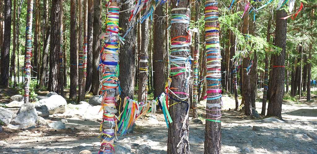 Опоясанные лентами деревья близ минерального источника, Аршан, Бурятия