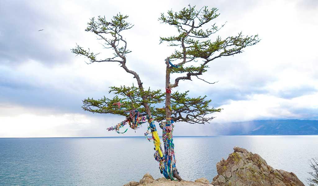 Священная лиственница на скале на берегу Байкала